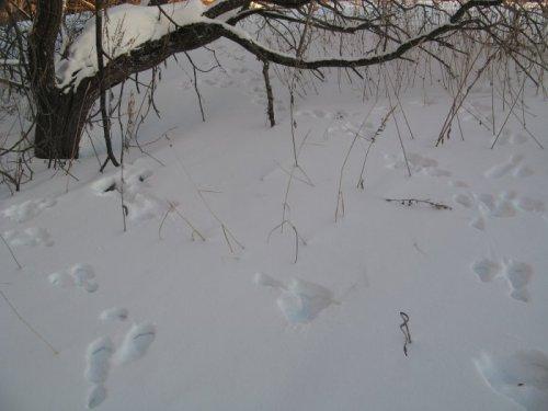 Охота в преддверии закрытия сезона