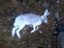 открытие охоты 1.11.13 год