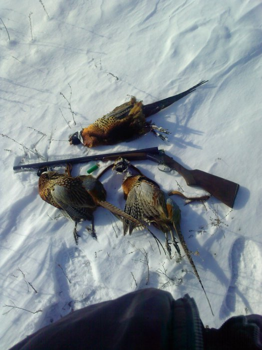 Закрытие фазаньей охоты!
