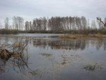 Чучела на фоне болотца.