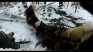 Охота на кабана с собаками ( зарезал ножом ) GoPro hero 3+ silver chest