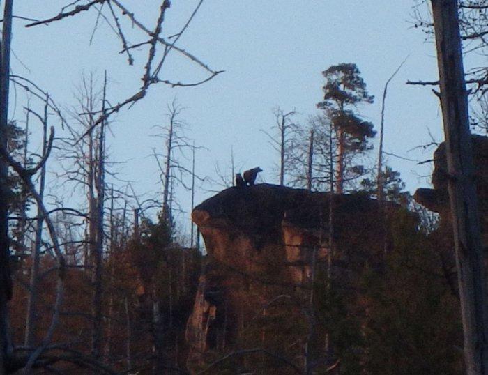Медведи на скальнике 2