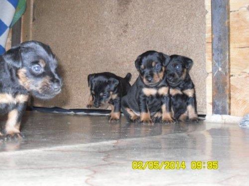 Три сыночка и лапуля дочка.