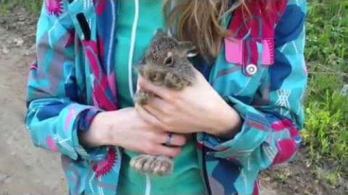 Заяц голыми руками