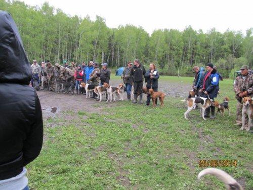 43_Новосибирская обл.выставка собак охотничьих пород.