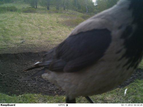 Любимая охотничья певчая птичка, уйди не загораживай!