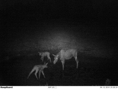 Мамашка ночью выгуливает