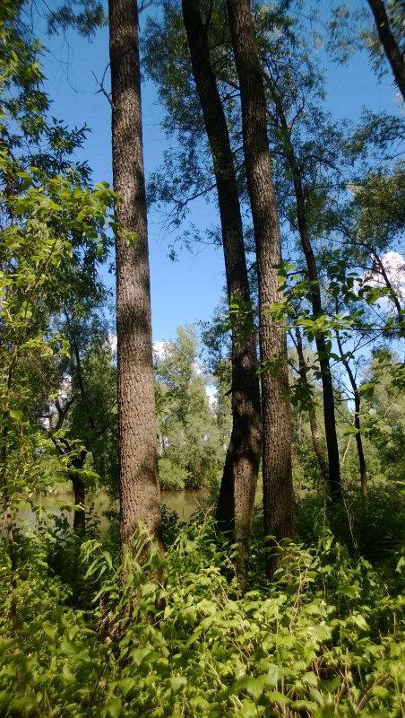 В Сибири тоже есть леса.