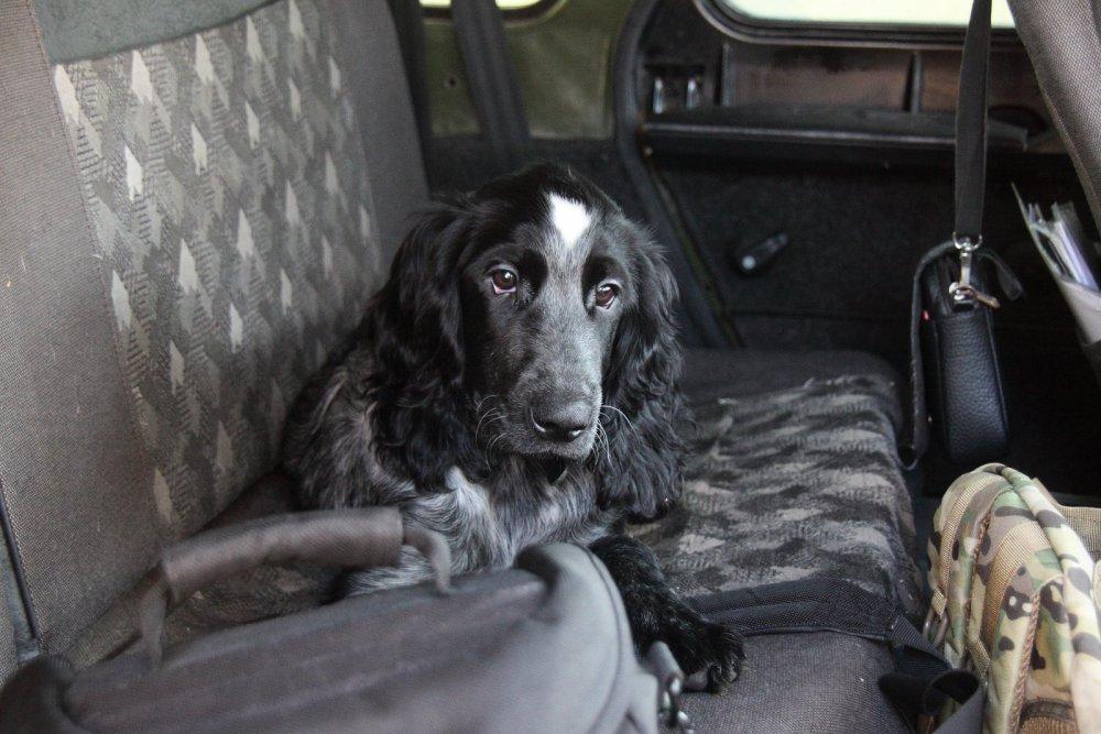 мой пес Урал