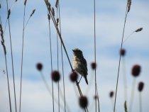 Птаха на траве
