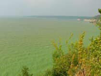 Наше зелёное море