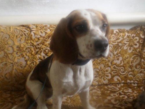 В Кемерово найдена собака п.Новостроика!