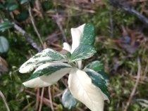 Кто знает, что это за растение? ))