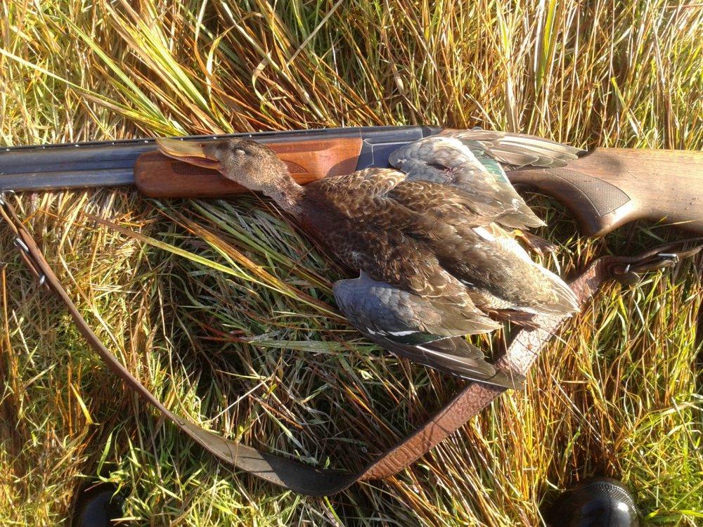 картинки охотники на птиц