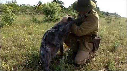 Дрессировка охотничьих собак (легавые) 1ч.