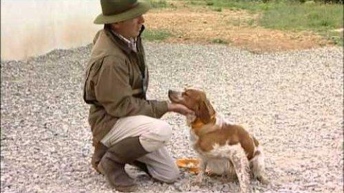 Дрессировка охотничьих собак (легавые) 2ч.