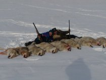 Удачная охота на волков.