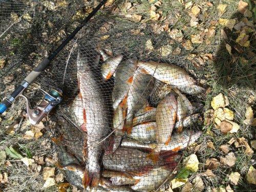 Каждый охотник немного рыбак, но не каждый рыбак - охотник.