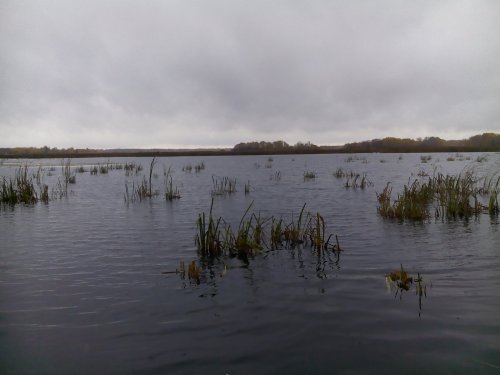 Пустое болото...
