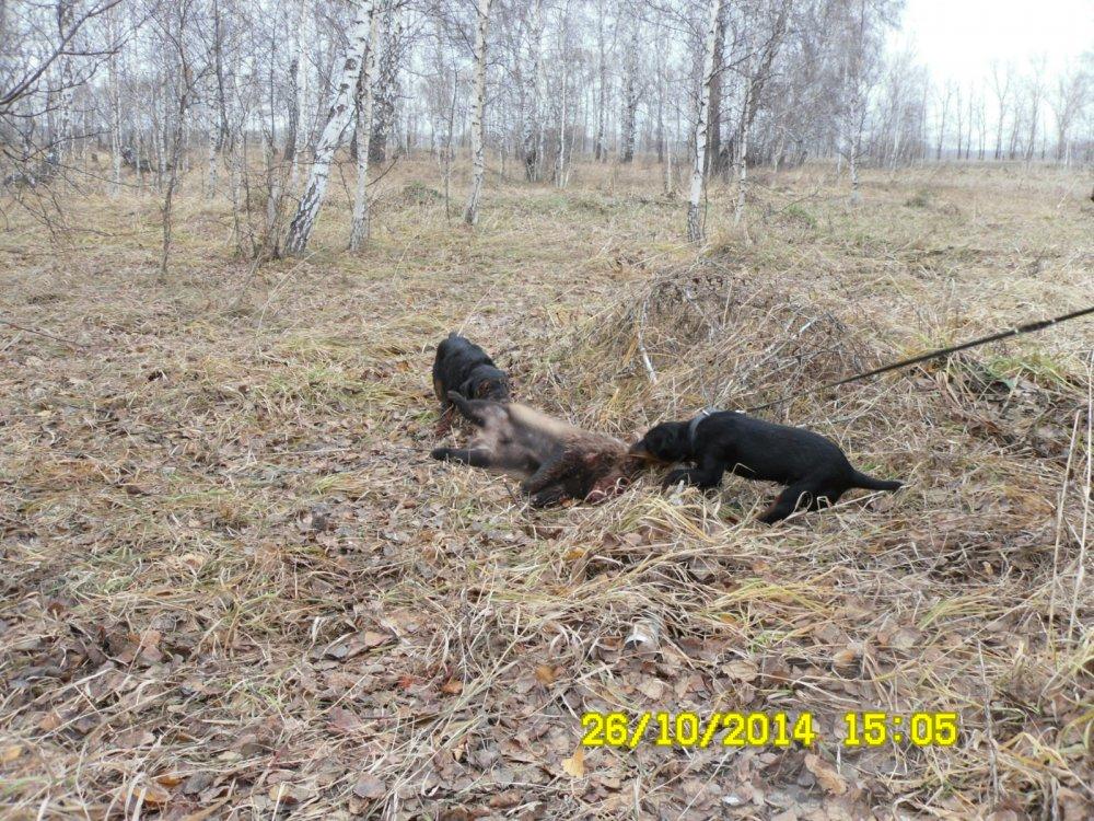 Мама и сын на охоте.