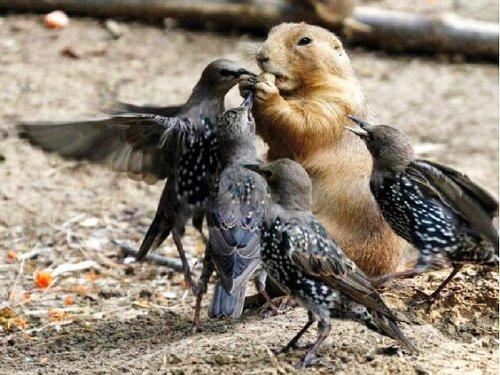 Птицы из 90-х )) налетели на терпилу...