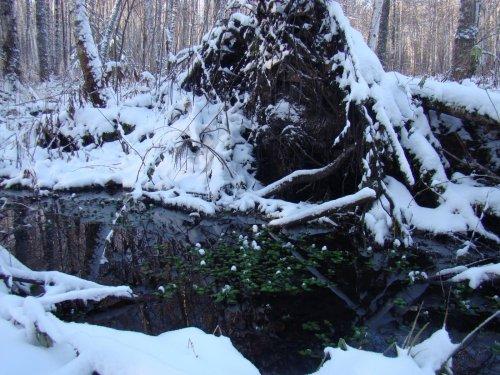 -10, снег, незастывший ручей и зелёная травка....