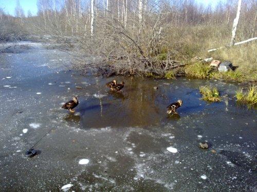 Закрытие по водоплавающей в Московской области