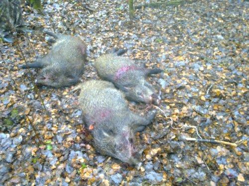 Осеннее открытие на копытных в Московской области