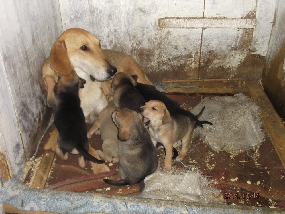 Альта со щенками