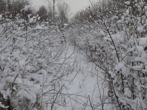 Путь настоящих охотников