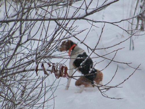 Польза снежиков след.