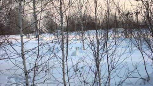 Форумчане наедине с зимой