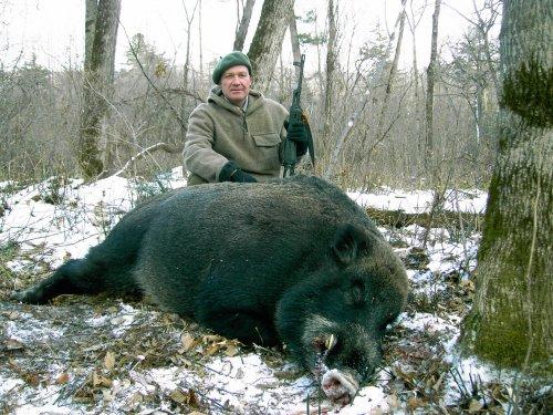 Кабаны Дальнего Востока России