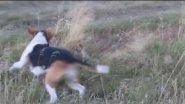Собачка и лисичка.