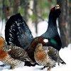 В Кузбассе увеличилась численность диких животных