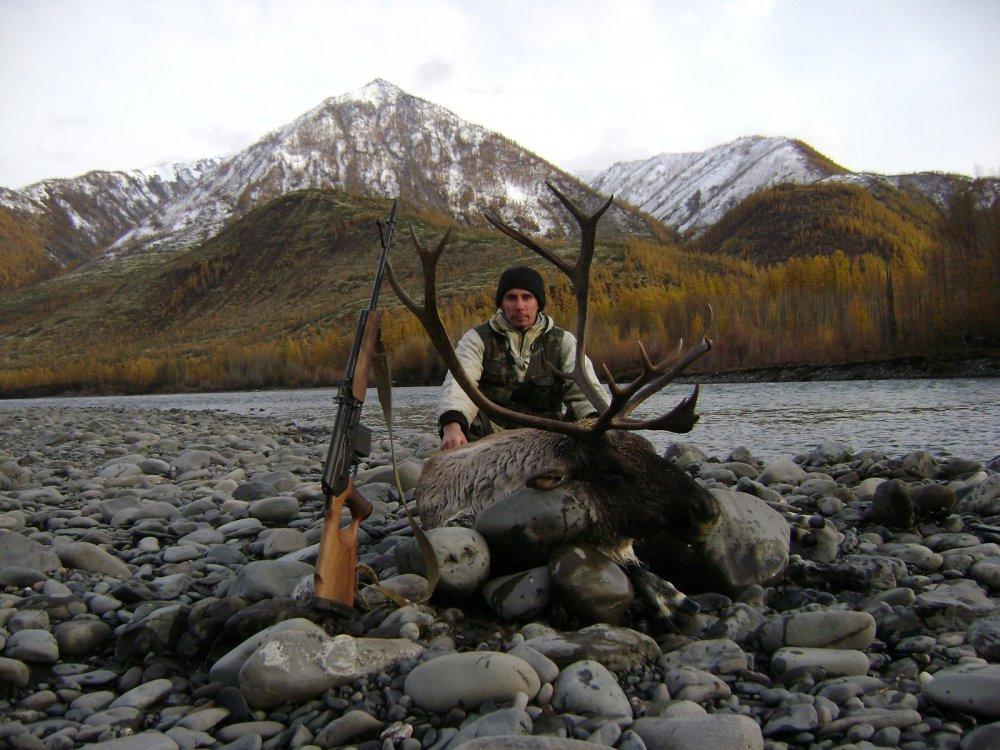 Горно-таежный северный олень