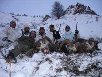 Снежные бараны