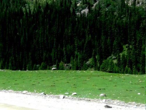 Киргизия. Посадка леса ущелье Джууку