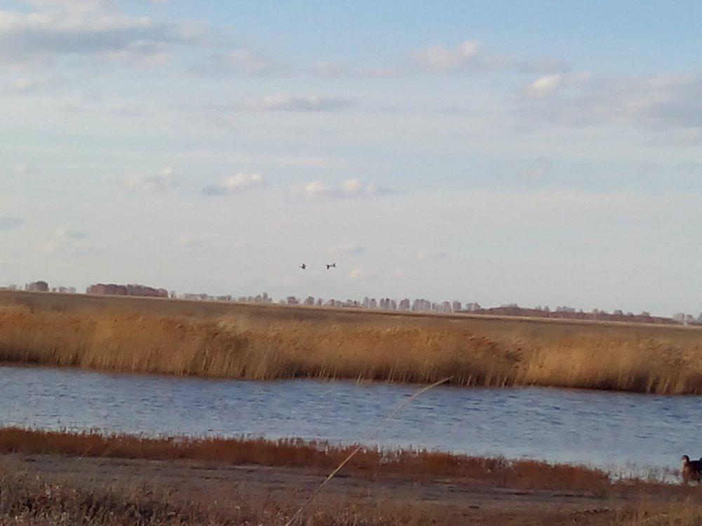 Летят утки!
