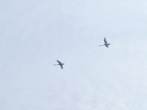 летят голубки