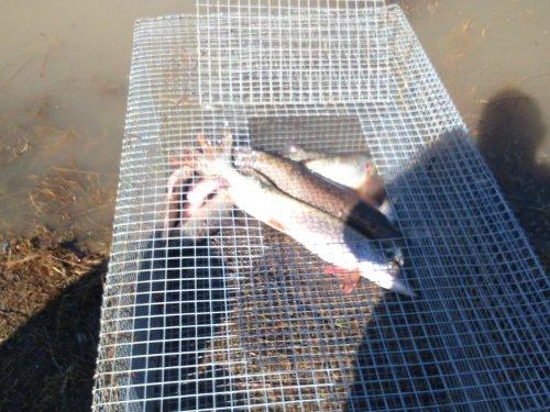 Закончилась охота, началась рыбалка.