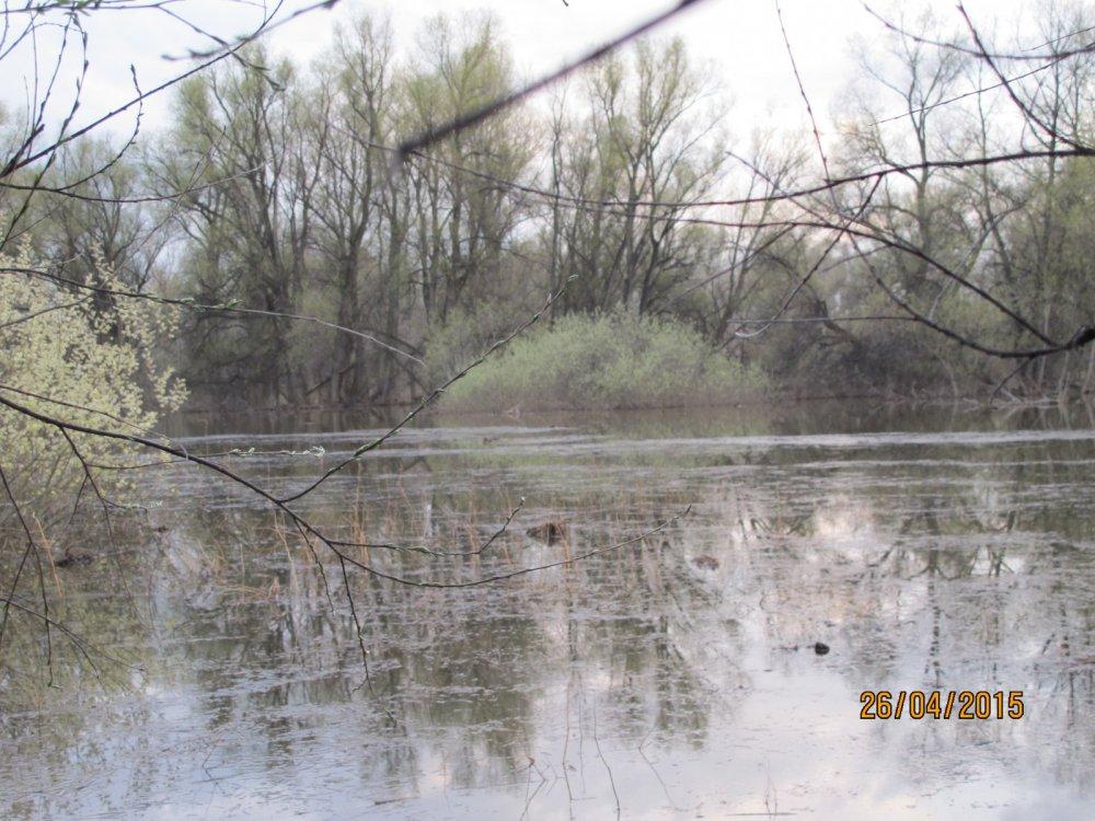 Весеняя охота 2015 г. на разливах в окрестностях Сузуна