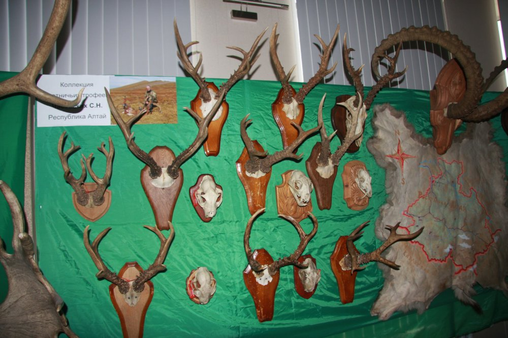 Выставка охотничьих трофеев, Барнаул, 15 мая 2015