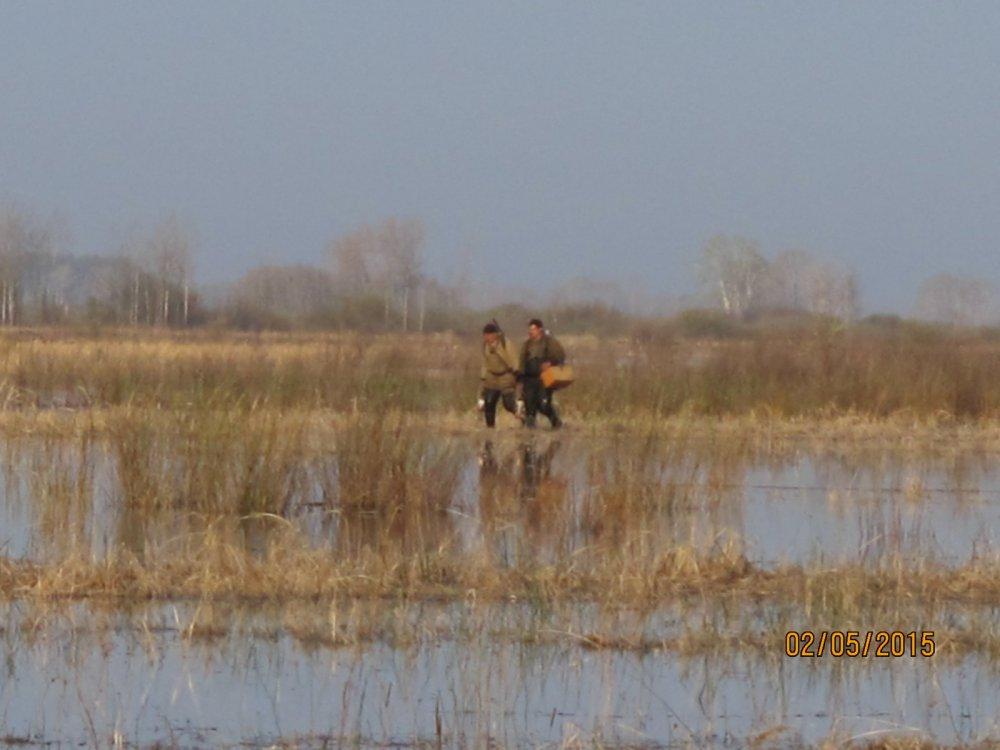 Весеняя охота 2015 на разливах в окрестностях Сузуна