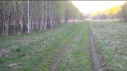 русские пегие гончие гоняют зайца беляка 2