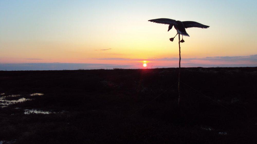 Садящийся на восходе солнца