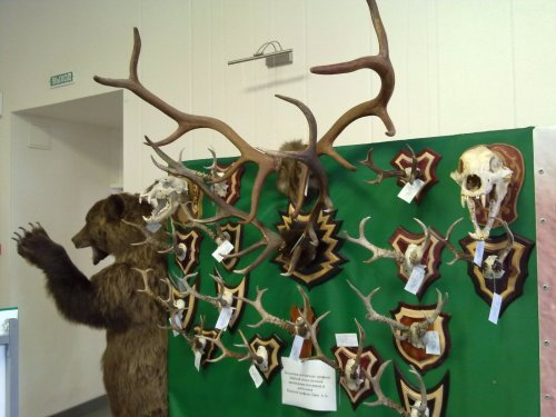 Выставка Барнаул