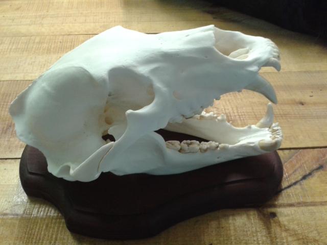 Как своими руками сделать череп