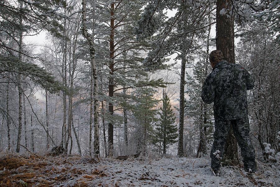 в алтайских лесах