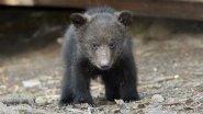Живодеры на джипе переехали медведя
